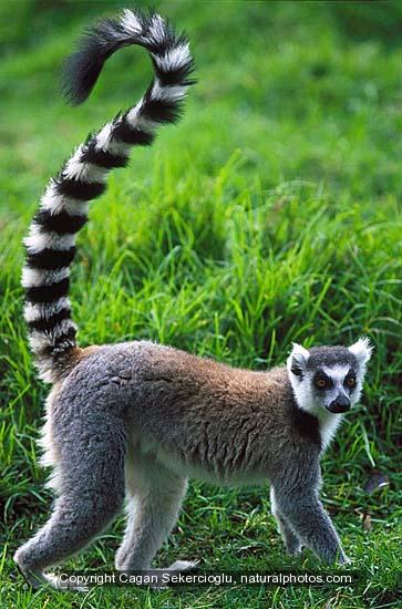 Travel2Madagascar  Authentic trailormade travel to